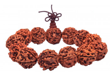 4 and 13 MukhiRudraksha- a unique gem with many unknown benefits
