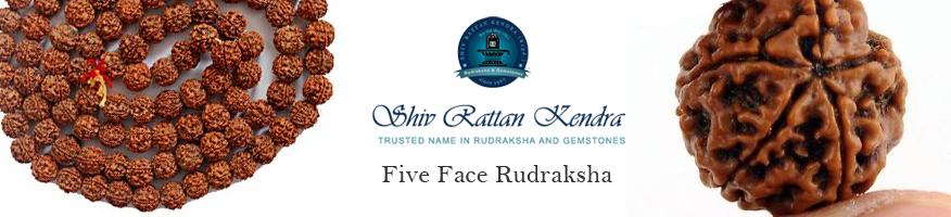 Five Face Rudraksha
