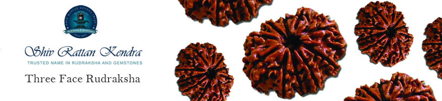 Three Face Rudraksha