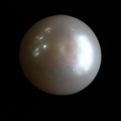 Natural Pearl (Moti) - 14.62 carats