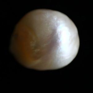 Natural Pearl (Moti) - 8.84 carats